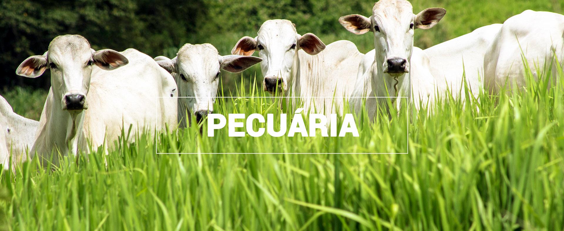 Agroflorabrasil